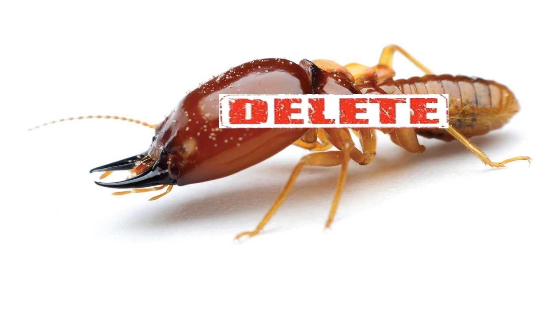 Get-Rid-of-Termites-www.koorook.com-16
